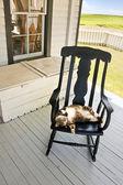 Cat sleeps upside down — Stock Photo