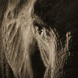 African Elephant portrait  — Stock Photo