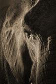 Afrikansk elefant porträtt — Stockfoto