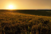 Golden sunrise — Stock Photo