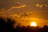 Geese fly near a large sun rising — Stock Photo