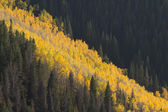 Avalanche of Golden Aspen Trees in Vail Colorado — Stockfoto