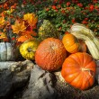 Colorful Autumn Garden Arrangement of Pumpkins, Gourds and Flowers make a great Thanksgiving Composition. — Stock Photo