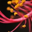 Flower stamen — Stock Photo