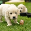 Stock Photo: Curios puppy