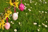 Easter eggs on branchlet with garden in background — Stock Photo
