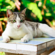 Cat on the table — Stock Photo