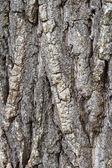 Tree bark detail — 图库照片
