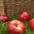 Discovery apples — Stock Photo #31963777