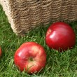 Stock Photo: Discovery apples