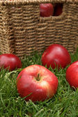 Discovery apples — Stock Photo