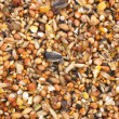 Bird seed mix — Stock Photo
