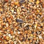Bird seed mix — Stock Photo