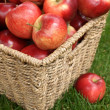 Stock Photo: Apple harvest
