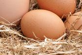 Fresh farm eggs — Stock Photo
