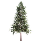 Norway Spruce Tree Isolated — Stock Photo