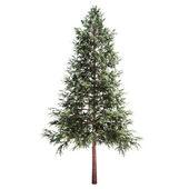 Gran träd isolerade — Stockfoto
