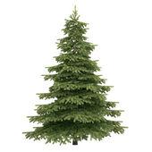 Spruce trädet isolerade — Stockfoto