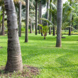 Palm tree plantation, garden, Thailand — Stock Photo
