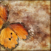 Butterfly Decorative background — Stok fotoğraf
