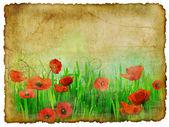 Album cover with poppies — Stock Photo