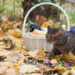Big cat with orange eyes in the autumn park — Stock Photo #32313157