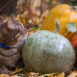 Big cat with orange eyes in the autumn park — Stock Photo