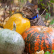 Big cat with orange eyes in the autumn park — Stock Photo #32313221