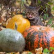 Big cat with orange eyes in the autumn park — Stock Photo #32313235
