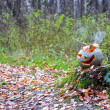 Halloween pumpkin with smoke in the forest — Stock Photo