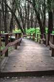 Wooden bridge in the forest — Stock Photo
