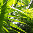 Stock Photo: Palm leaves in sun