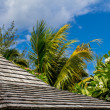Roof, tropical greenery and blue sky — Stock Photo #38656155