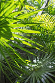 Palm leaves in the sun — Stock Photo