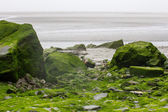 Stones covered with the green water plants — Foto de Stock
