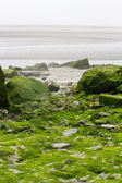Stones covered with the green water plants — Stock Photo