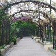 Greenery arch in the garden — Stock Photo #46926863
