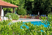 Relaxation zone with greenery and swimming pool — Stockfoto