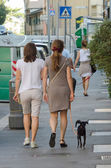 Dogs for a walk — Stock Photo