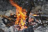 Latem ognisko — Zdjęcie stockowe