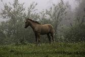 Fohlen im Wald — Stockfoto