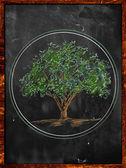 Tree Sketch color leaves on blackboard — Stock Photo