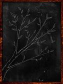 Branch Plant Sketch on Blakboard — Stock Photo