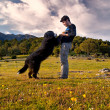 Young boy train your dog in the field one sunny spring afternoon — Stock Photo