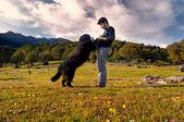 молодой мальчик поезд вашу собаку в поле одном солнечный весенний день — Стоковое фото
