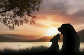Doggy romance at sunset — Stock Photo