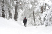 Man walking in snowy forest — Stock fotografie