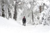 Man walking in snowy forest — Stock Photo