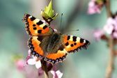 Colourful Butterfly on Flower — Stock Photo