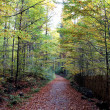 Autumn Walk around Sumava Mountains — Stock Photo